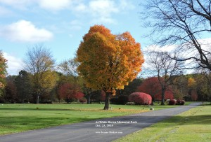 The Heart Tree at White Haven Memorial Park, October 23, 2015