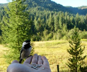 Bird in my hand