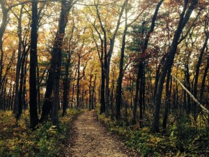 Devils Lake path October