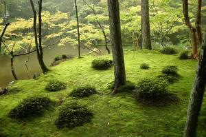 """Saihouji-kokedera01"" by Ivanoff~commonswiki - Self-photographed. Licensed under CC BY-SA 3.0 via Commons - https://commons.wikimedia.org/wiki/File:Saihouji-kokedera01.jpg#/media/File:Saihouji-kokedera01.jpg"