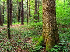 """""""Flickr - Nicholas T - Woodland (1)"""" by Nicholas A. Tonelli from Pennsylvania, USA - Woodland (1). Licensed under CC BY 2.0 via Wikimedia Commons - https://commons.wikimedia.org/wiki/File:Flickr_-_Nicholas_T_-_Woodland_(1).jpg#/media/File:Flickr_-_Nicholas_T_-_Woodland_(1).jpg"""
