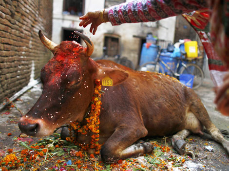 Cow slaughter is illegal in Nepal and many Indian states. It is considered a taboo by many buddhists of Sri Lanka and China, apart from Hindus in these countries.