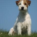 dogphotos-finn_001