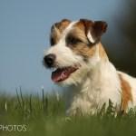 dogphotos-louie_002