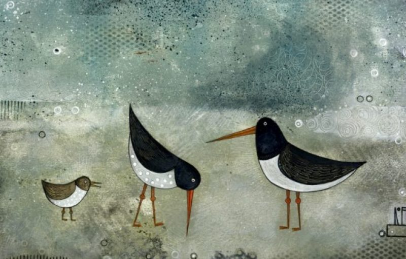 Oyster Catcher Family