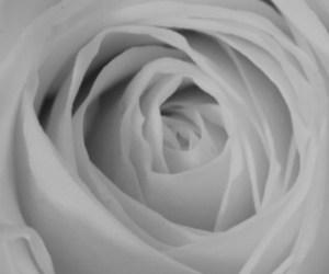 2016-01: Blumenstrauss in vier Bild-Paaren