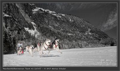 Hundeschlittenrennen Team 41 (3/10)