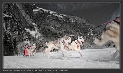 Hundeschlittenrennen Team 41 (5/10)