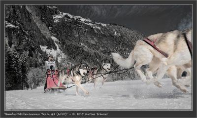 Hundeschlittenrennen Team 41 (6/10)