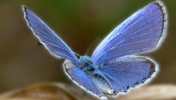 extinción de insectos