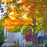 Vibrant orange and red maple in front of Boe Chapel