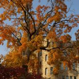 Burnt orange trees with Holland Hall peeking through the branches