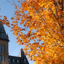 Bright orange maple tree branches in front of the top half of Old Main
