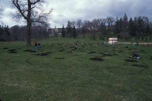 treeplantingsbefore