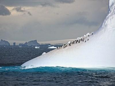 Penguins on iceberg in Antartica.