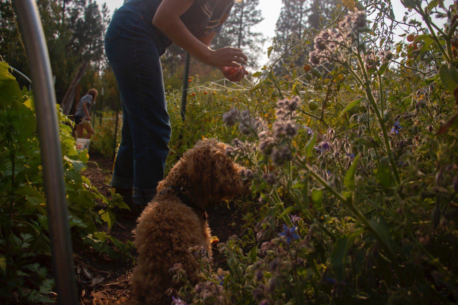 Lauren Sherman '22 performing gardening post responsibilities.