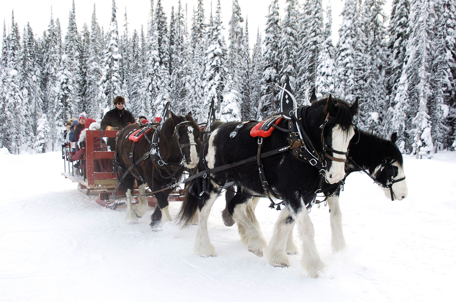 https://i1.wp.com/wp.stu.ca/wellness/wp-content/uploads/sites/17/2014/11/Horse-Sleigh-Rides.jpg