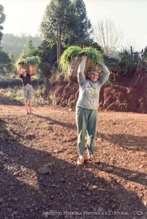 Trabalho em propriedade rural. Sra. Zang carregando pasto para o gado. Linha dos Pintos – Ipira, SC, 06/jul./1997. Autoria: Ary Trentin.