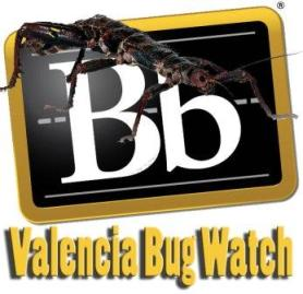 Valencia Bug Watch
