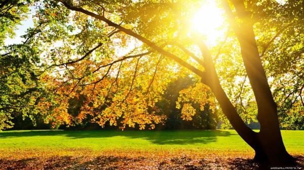 Осень природа осенью широкоформатные обои и HD обои для