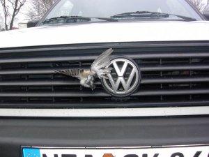 Für diesen kleinen Singvogel endete die Kollision mit einem Auto leider tödlich, © e7 via pixelio.de