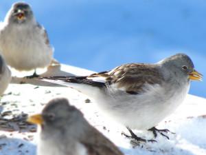 Wo viele Vögel auf engem Raum zusammenkommen, sollte unbedingt auf die Hygiene geachtet werden, © Rainer Sturm/ Pixelio.de