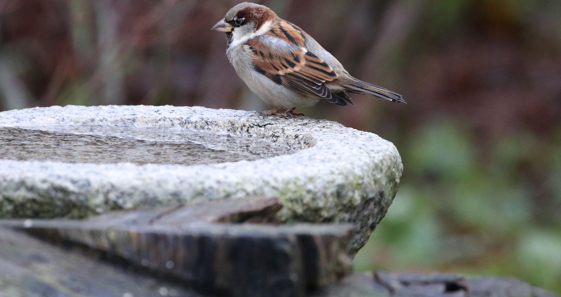 Trinkwasser Anbieten Wildvogelhilfeorg