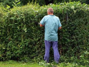 Pflegearbeiten an Hecken müssen stets außerhalb der Brutsaison der Vögel ausgeführt werden, © Antranias / Pixabay