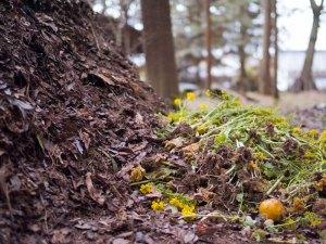 Komposthaufen bieten kleinen Tieren einen Lebensraum und vielen Vögeln reichlich Nahrung in Form von Insekten und Würmern, © Joi Ito via Flickr