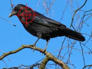 Rabenvogel im Fadenkreuz, Grafik basierend auf Bildmaterial von © FraukeFeind (Vogel) und stux (Fadenkreuz) / Pixabay