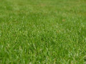 Perfekter Rasen mag dem Augen schmeicheln, er bietet Wildtieren jedoch keinen guten Lebensraum, © huskyherz / Pixabay