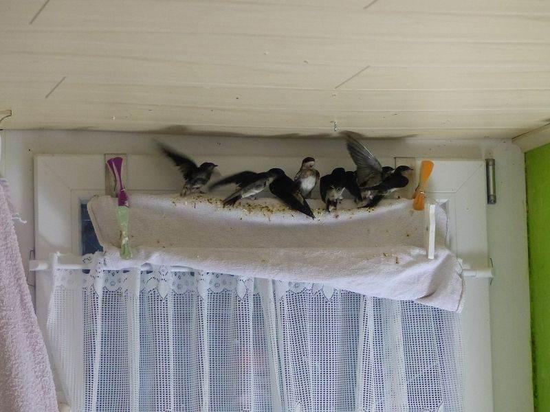 Verschmutzte Handtücher sind regelmäßig zu wechseln, © N.K und T.K.