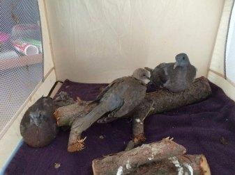 Junge Tauben können zeitweise in einem Kinderreisebett untergebracht werden, © Margareta Michna