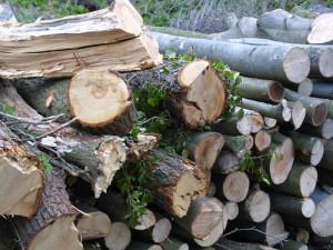 Totholzstapel sollten in einem naturnah gestalteten Garten als Kleinlebensraum nicht fehlen, © HC via Flickr