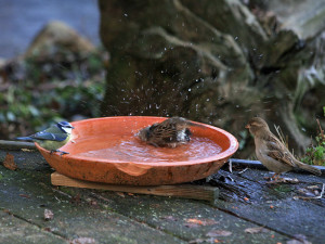 Ein Platz zum Trinken und Baden ist für Vögel auch im Winter sehr wichtig, © Ch. Kuchem / Pixelio.de