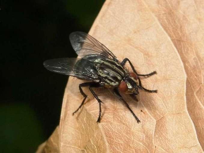 Die Jungtiere vieler Vogelarten lassen sich unter anderem mit Fliegen füttern, © Gaby Schulemann-Maier