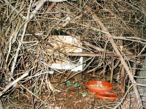 Nicht nur für Vögel sind Reisighaufen wichtige Kleinlebensräume, sondern auch für Igel und andere Tiere, © Dagmar Offermann