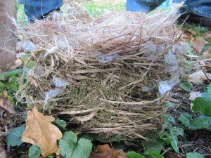 Ein bei der Reinigung aus einem Nistkasten entnommenes Nest eines Grauschnäppers, © Claus Walter