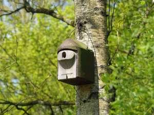 Ein Nistkasten für Höhlenbrüter an einem Baum, © Gaby Schulemann-Maier
