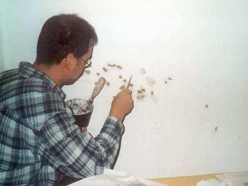 Spechte klopfen gern an Wänden, weshalb nach der Unterbringung eines solchen Vogels in einem Raum oft eine Renovierung nötig ist, © Anke Dornbach