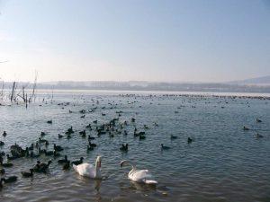 Wasservögel auf einem See im Winter, © Andrea Krüger-Wiegand