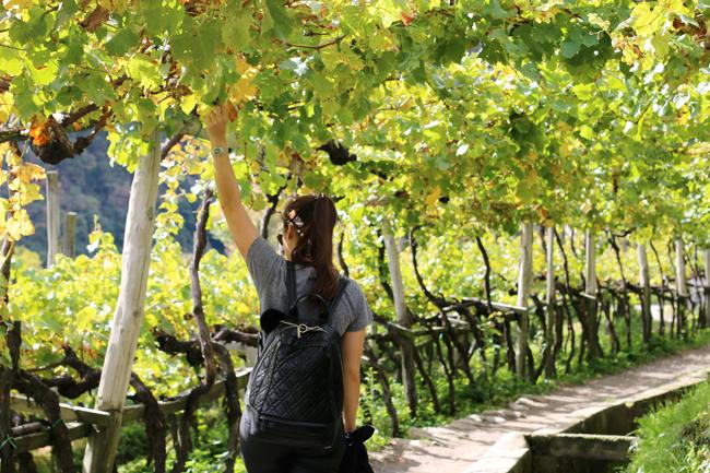 Wandern zwischen Weinbergen, Wandern in Südtirol, Herbstspaziergang in Südtirol