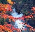 養老渓谷の紅葉と温泉宿
