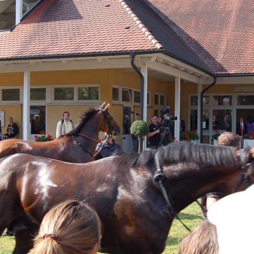 Stallausflug 2010- 04.09.2010 15-37-53