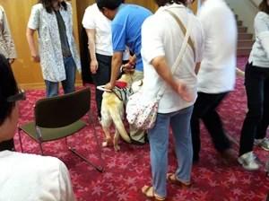 画像:盲導犬講習会の様子