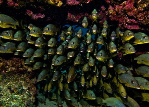 Underwater Traffic