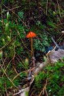Judge's Option 1st Place Could be a Hygrocybe punicea or Mycena acicula alas I did not turn it over to find out. . . Richard Jacob