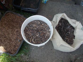 Preparing mulch for inculation.
