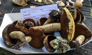 Boletus vermiculosoides. By Richard Jacob