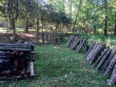 shiitake-mushroom-logs-by-richard-jacob